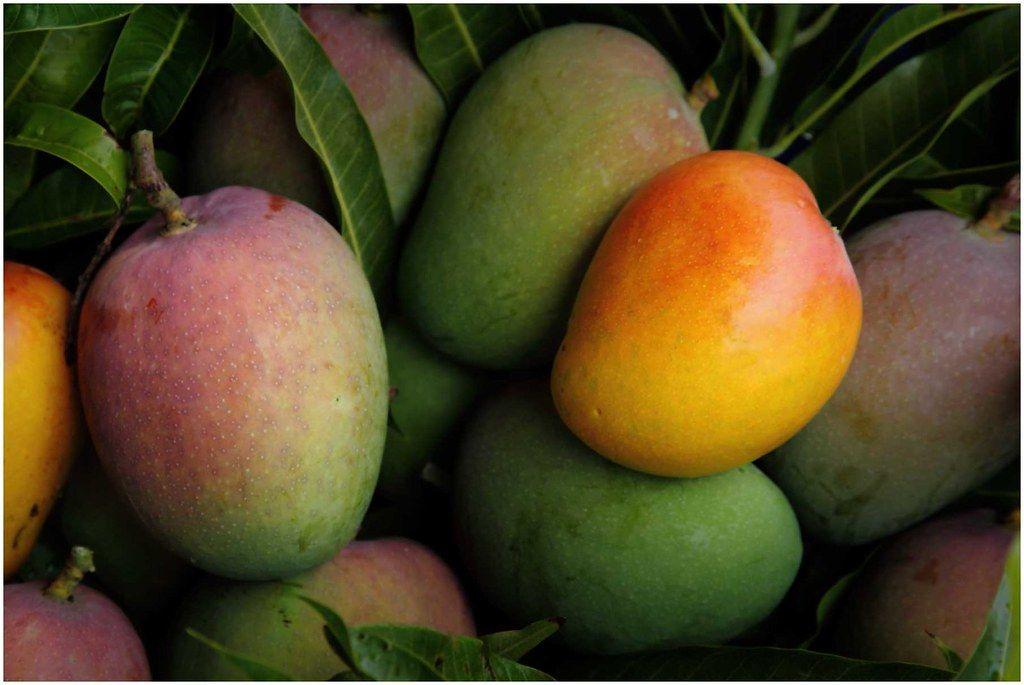 Mrożone owoce mango w formie pulpy